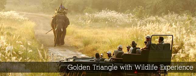 Golden Triangle with Wildlife Experience